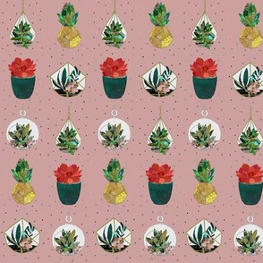 Festive Succulents on Pink