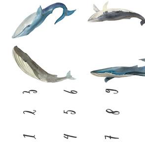 Whale Milestone Blaket