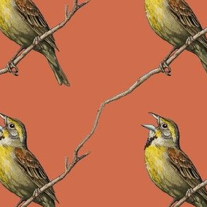 Dickcissel, red