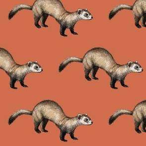 black footed ferret, red