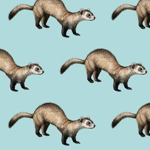black footed ferret, lighter blue