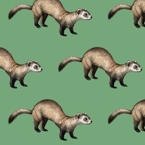 black footed ferret, green