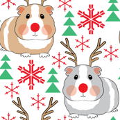 rudolph the red nose guinea-pigs