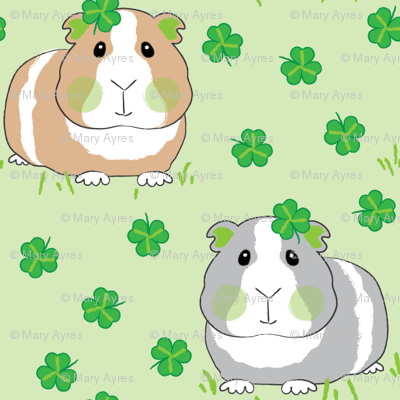 guinea-pigs-with-shamrocks