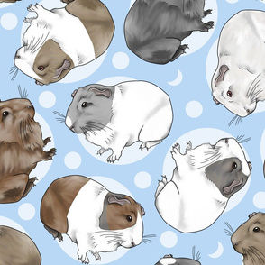 Guinea pigs and moon dots - large blue
