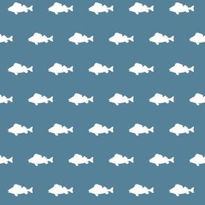 fish run on coastal blue
