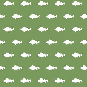 fish run on Evergreen