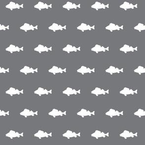 fish run on Smokey Mountain Grey