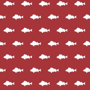 fish run on Scarlet