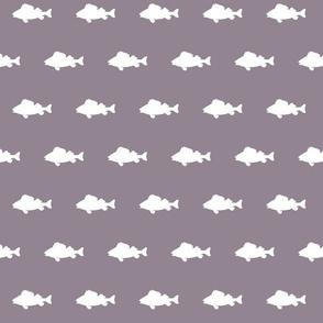 fish run on Lilac