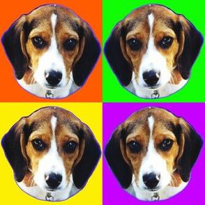 Beagles Beagles Everywhere