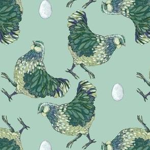 hen scatter, hardy kiwi