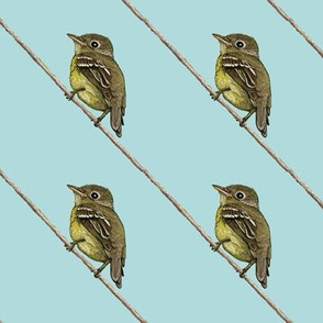 Yellow-bellied Flycatcher, diagonal, lighter blue