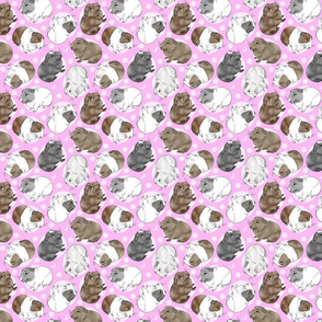 Guinea pigs and moon dots - small pink
