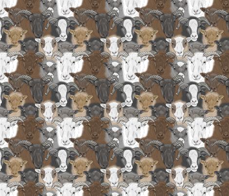 Shetland Sheep herd faces - small fabric by rusticcorgi on Spoonflower - custom fabric