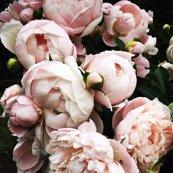 Rdark_floral_2_mediumformat_shop_thumb