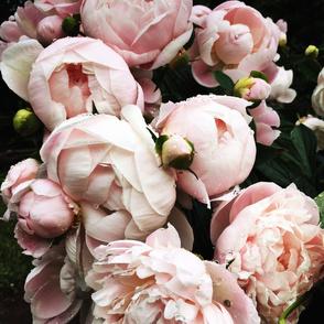 Dark_Floral_2_MediumFormat
