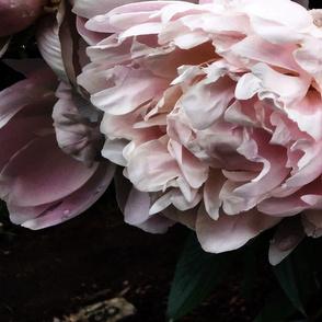 Dark_Floral_5_Large_Format