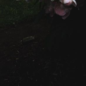 Darl_Floral_1_Large_Format