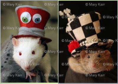 Fancy Rats in Fancy Hats