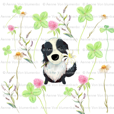 Border Collie Summer Meadow