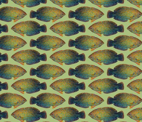 shortnose wrasse (lime) fabric by kolekine on Spoonflower - custom fabric