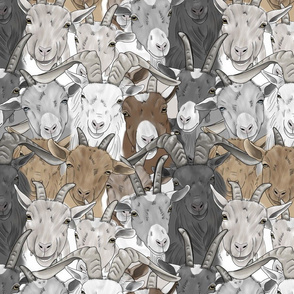 Goat herd faces - medium