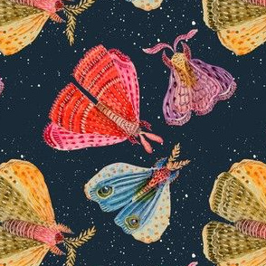 Star Moths