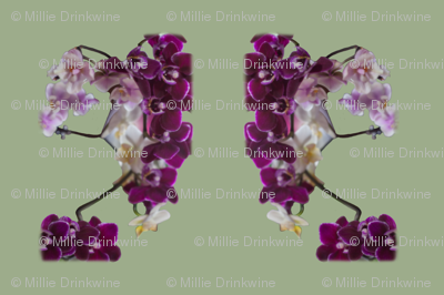 Orchid mirror oppo horizontal