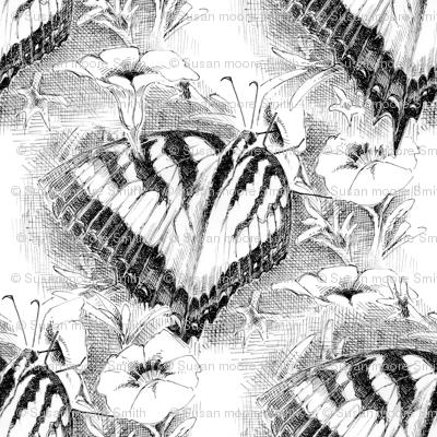 B_W Butterfly
