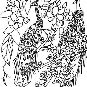 peacock blacknwhite
