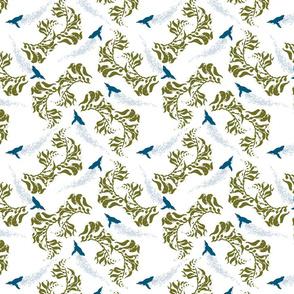 Korora in Kelp