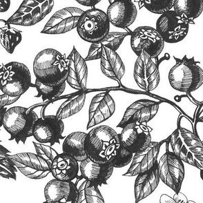 Graphic Berries