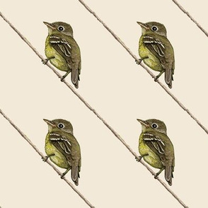 Yellow-bellied Flycatcher, diagonal, off white