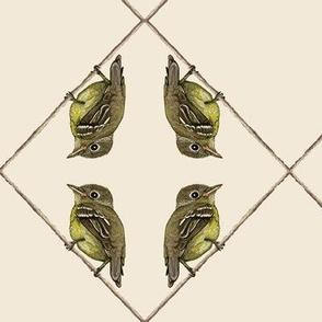 yellow-bellied flycatcher, mirror, off white