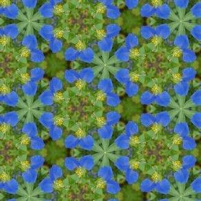 Blue Daylily Flower Floral Pattern