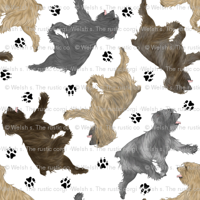 Trotting Pyrenean Shepherds rough face and paw prints - white
