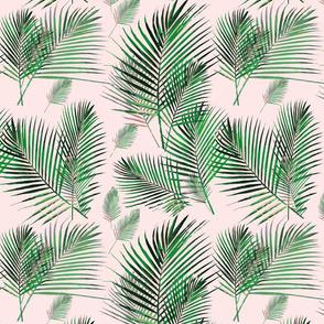 areca palms on blush