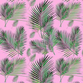 areca palms on pink palm frond