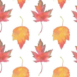 Watercolor Maple Leaves