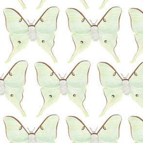 Watercolor Luna Moths