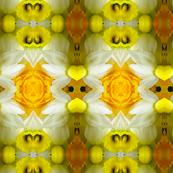 Symmagery Daffodils