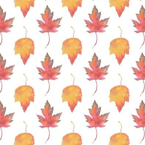 Watercolor Maple Leaves -- Small Scale