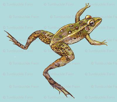 leopard frog leap, lighter blue