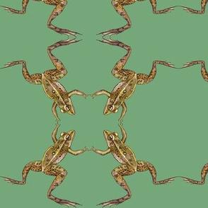 leopard frog leap,  mirror,  green