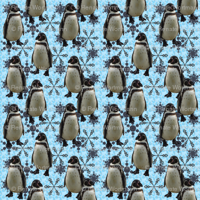 arctic pinguin and snowflakes