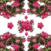Detroit Zoo Roses