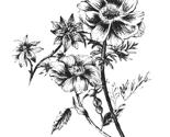 Rflowers_thumb