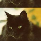 Misty, the Cat