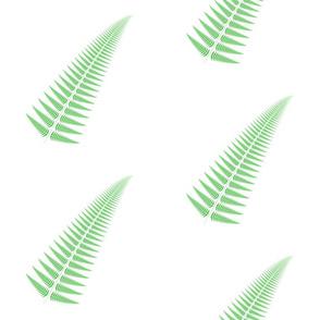 Fresh Green Fern